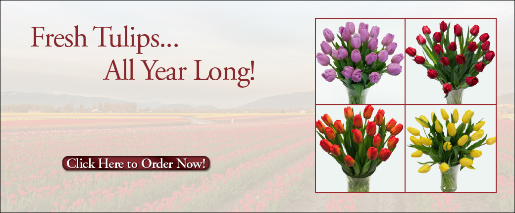 Fresh Cut Flowers & Spring Flowering Bulbs: Tulips.com - photo #16