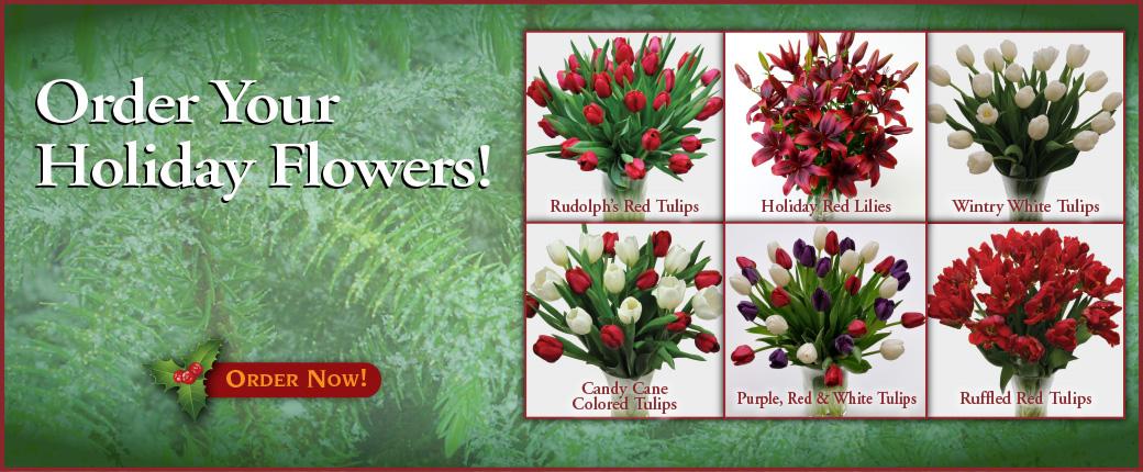 Fresh Cut Flowers & Spring Flowering Bulbs: Tulips.com - photo #2