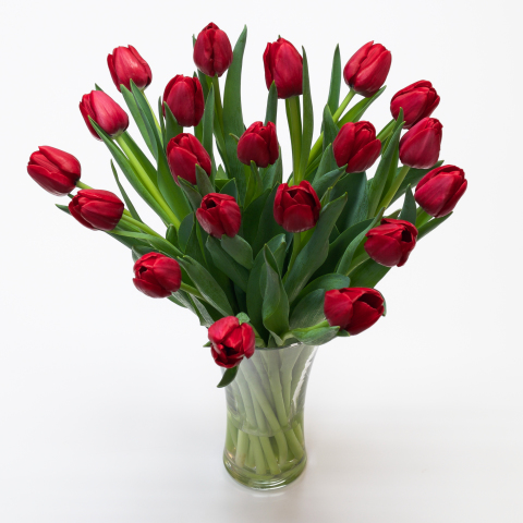 Traditional Red Tulips