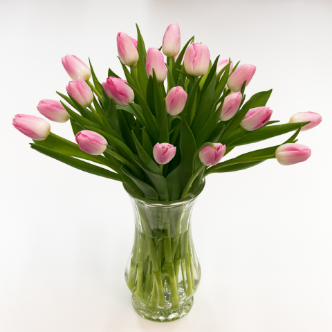 Lovestruck Light Pink Tulips