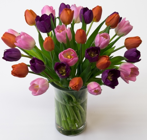 Light Pink, Orange & Purple Cut Tulips