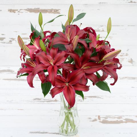 Firebolt Holiday (Oriental) Lilies