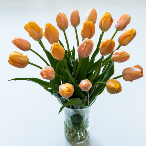 French Tulips Grower's Choice