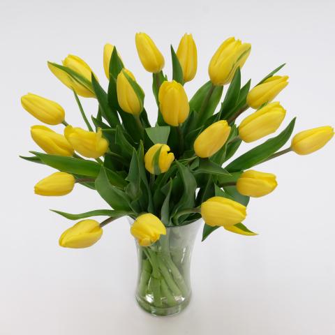 Yellow tulips fresh tulipstulips yellow tulips mightylinksfo