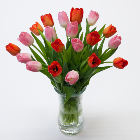 Light Pink and Orange Tulips