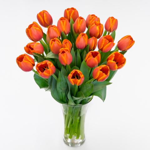 Autumn Orange Tulips