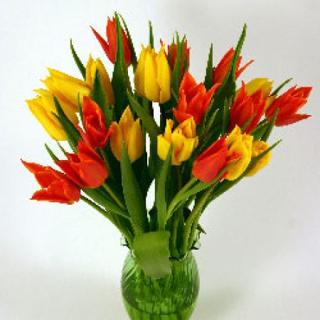 Orange & Yellow Cut Tulips