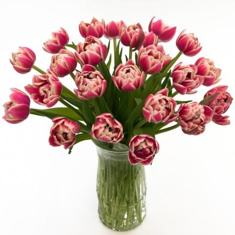 Columbus Peony Tulips
