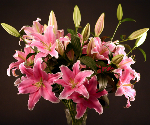 Pink Oriental Lilies - Very Fragrant!
