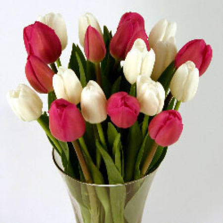 Pink & White Cut Tulips
