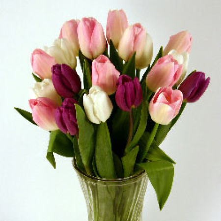 Purple, Light Pink & White Cut Tulips