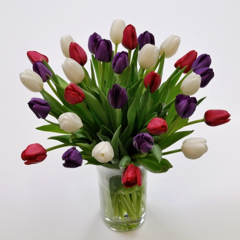 Purple red white tulipsfresh flowers tulips red white purple tulips mightylinksfo Gallery