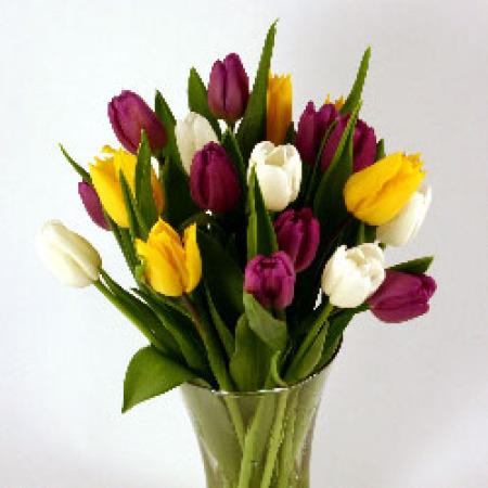 Purple Yellow White Tulipsfresh Flowerstulips