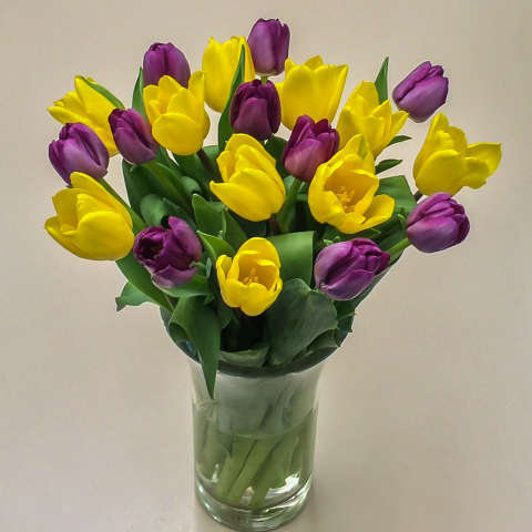 Purple yellow tulips fresh flowers tulips purple yellow tulips mightylinksfo