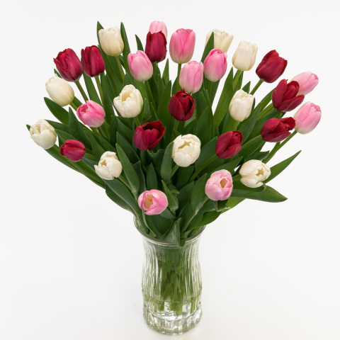 Red, White & Light Pink Tulips