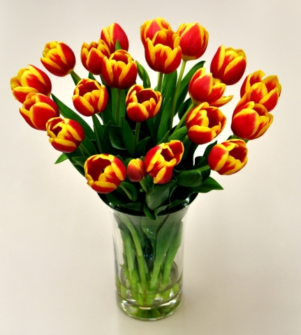 Multi Color Tulips