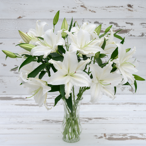 White Oriental Lilies - Very Fragrant!