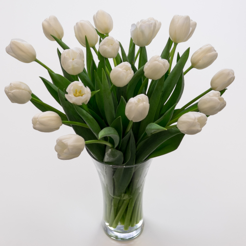 White Tulips Fresh Flowers Tulips