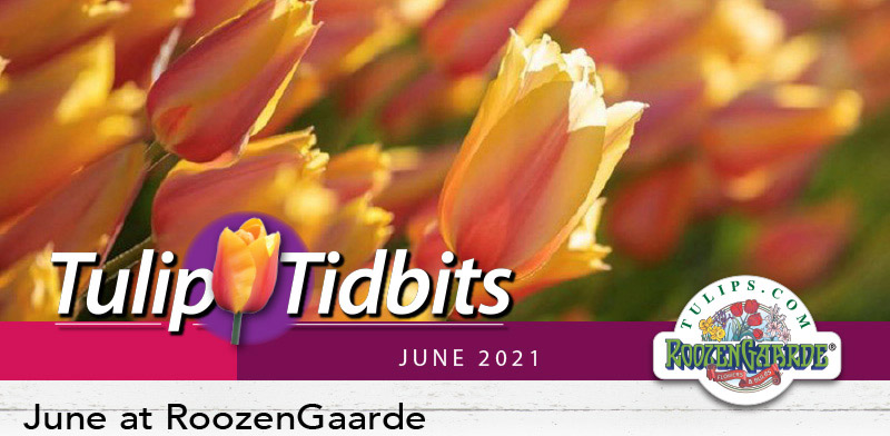 June at Roozengaarde