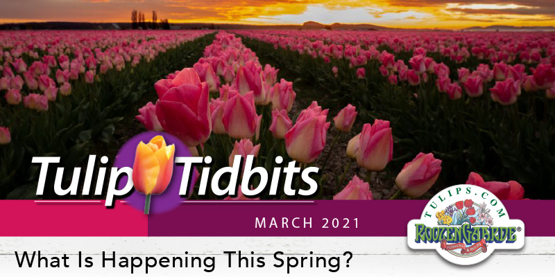 What Is Happening This Spring?