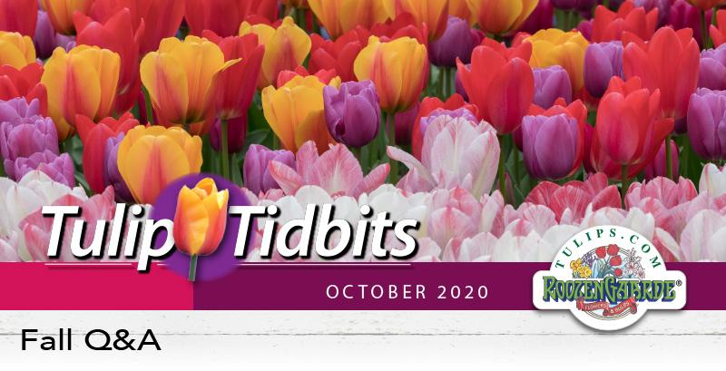 Tulips Tidbits October 2020 - Fall Q&A