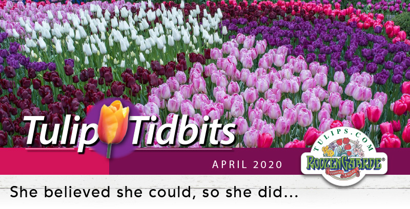 Tulips Tidbits April 2020 - She believed she could, so she did...
