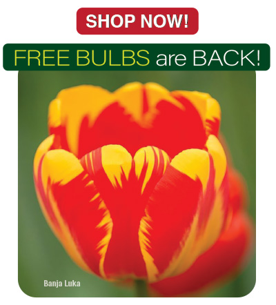 FREE BULBS