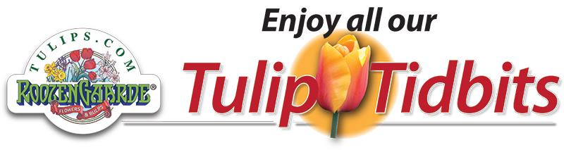 Enjoy all our Tulip Tidbits