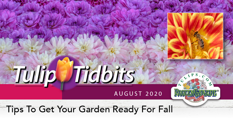 Tulips Tidbits August 2020 - Tips To Get Your Garden Ready For Fall