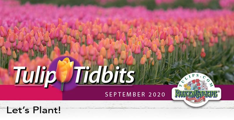 Tulips Tidbits September 2020 - Let's Plant!
