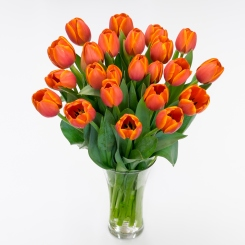 Orange Cut Tulips