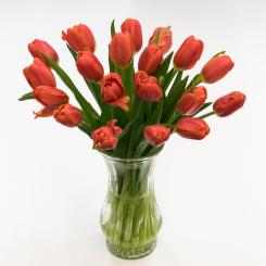 Orange-Juice-Tulips