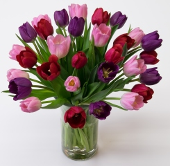 Sweetheart Tulip Mix