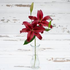 Firebolt Red Oriental Lily