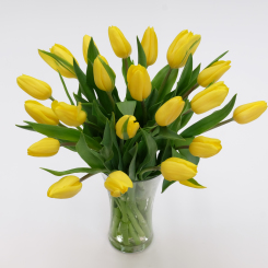 Golden Yellow Tulips
