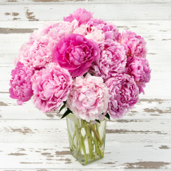 Peonies - Grower's Choice
