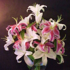 Pink & White Oriental Lilies - Very Fragrant!