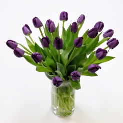 Purely Purple Tulips