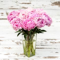 Sarah Bernhardt Peony Flowers