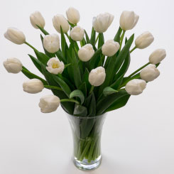 Purely White Tulips