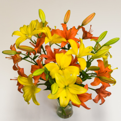 Yellow & Orange Asiatic Lilies