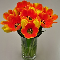Orange & Golden Yellow Cut Tulips