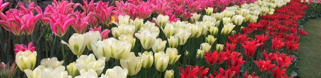 Fall flower bulbs spring flowering bulbs tulips bulbs mightylinksfo