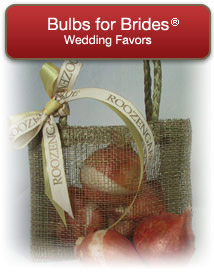 Wedding Bulbs for Brides