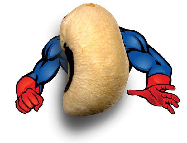 A Legume With Fight