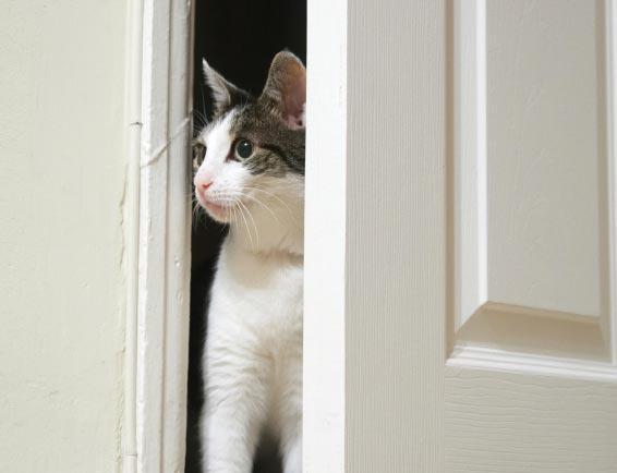 A Curious Feline