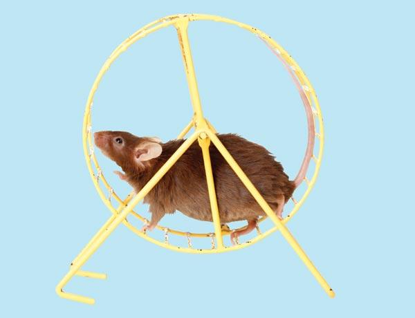 Gym Rats