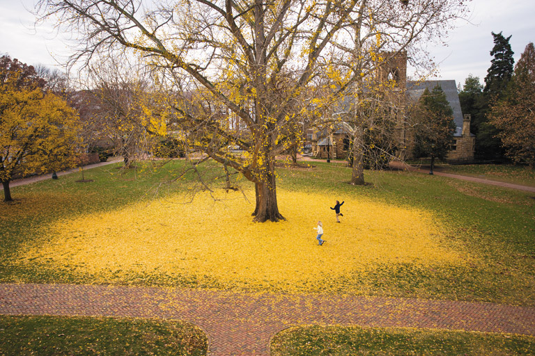 The Pratt Ginkgo