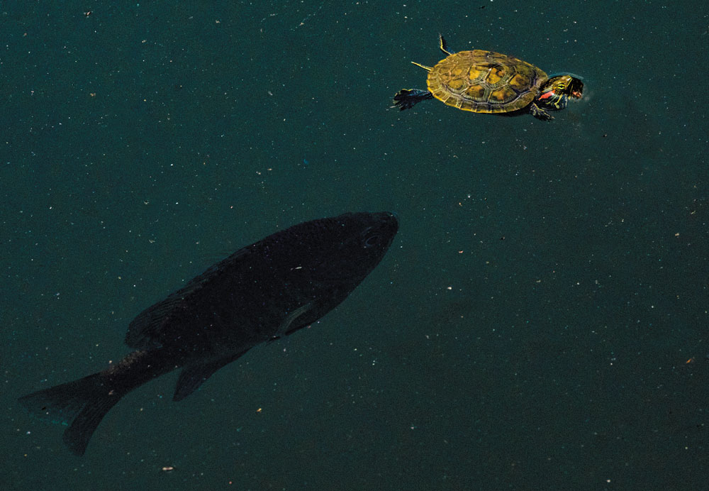 A fish and a turtle