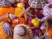 Sea Shell Treasures Jigsaw Puzzle